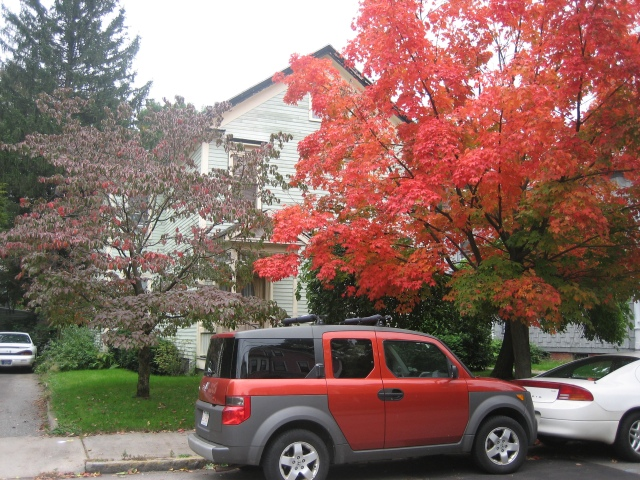 Fall foliage-colored car